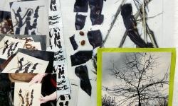 johannisbrotvögel, 2006, 45 x 30 cm, Müllassemblage aus der Reihe Transitorische Projekte